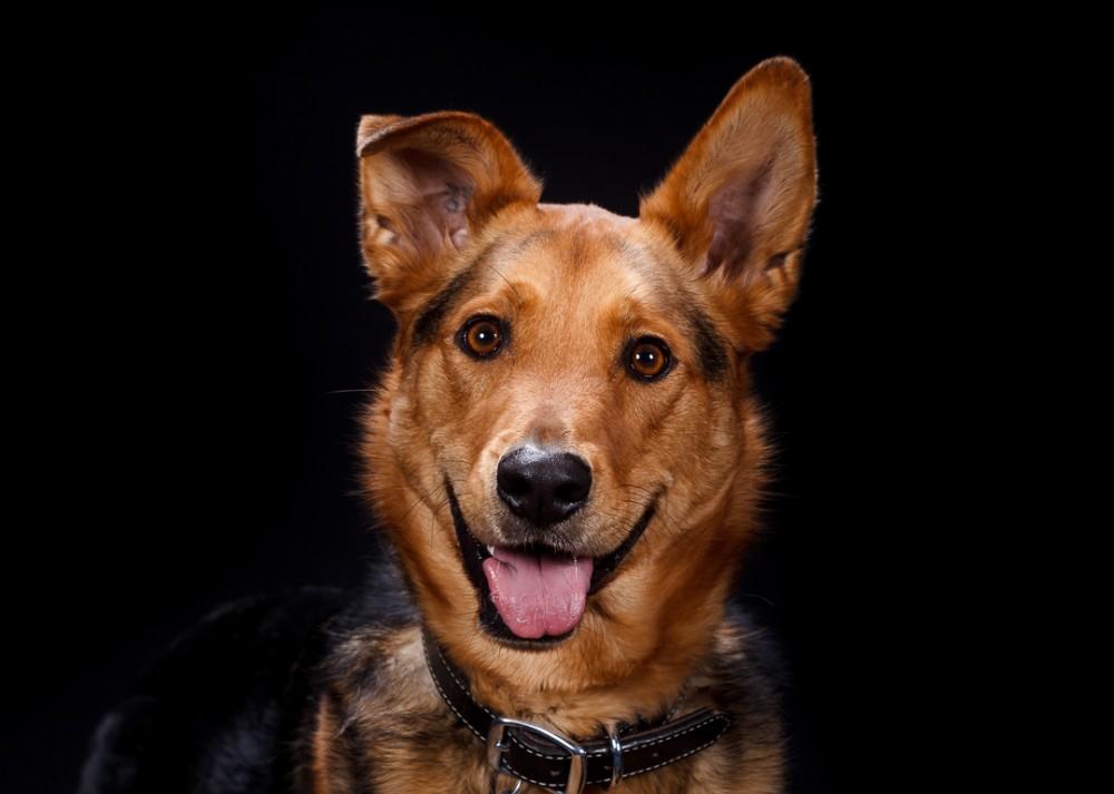 Dog Day 2012