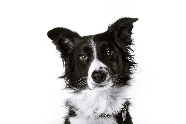 Abby | Black & White Pet Portrait