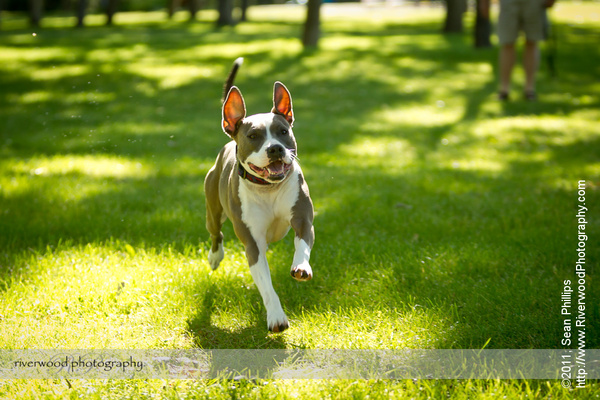 Pet Portraits at North Glenmore Park
