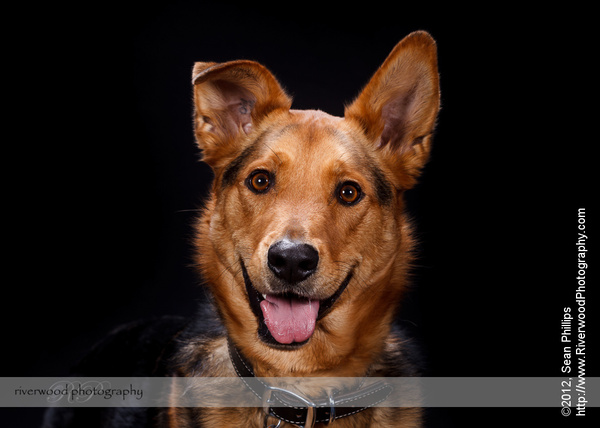 Pawsitively Portraits: Dog Day 2012