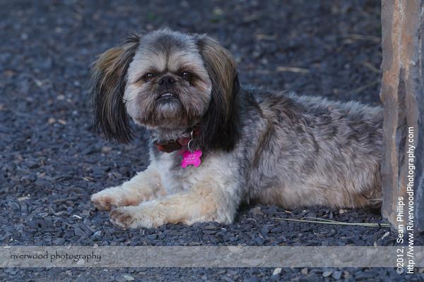 Dog Portrait in McKenzie Towne