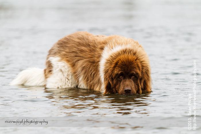 Spring Dog Photography