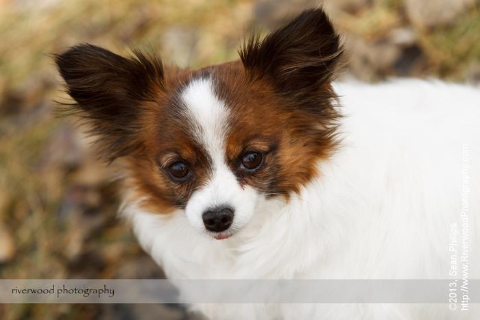 Family Pet Portraits