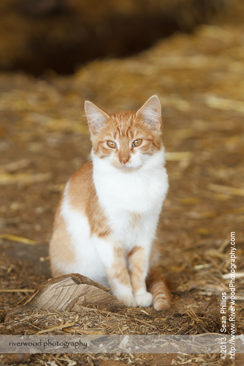 Kitten at a Dairy Farm